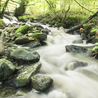 Afon Conwy near Source