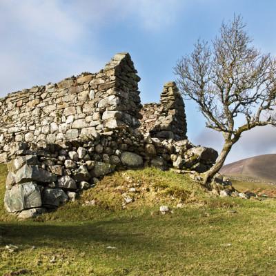 Hawthorn by OldBarn