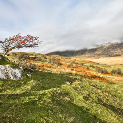 Hawthorn Tree on Dyffwys Mountain