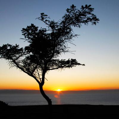 Tree Silhoette on Bardsey Island Tree