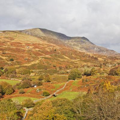 Dyfwys Ridge
