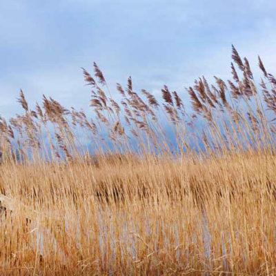 Reeds3_web