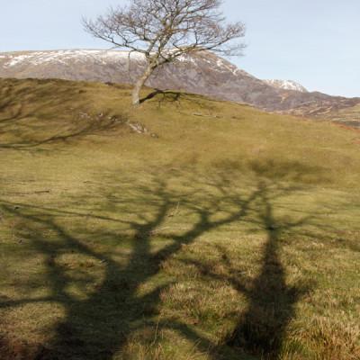 TreeShadows_web