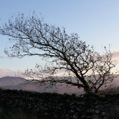 TreeSilhoette_web