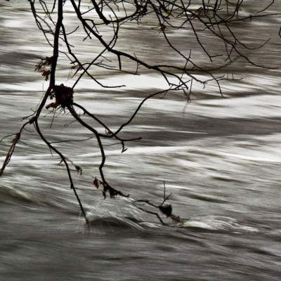 TreeStream_web