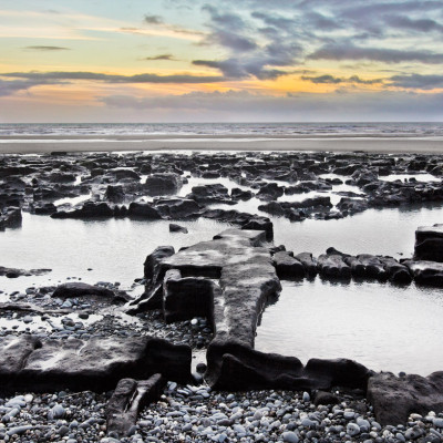 Remains of Ancient Forest in Cardigan Bay