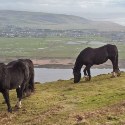 Welsh-Cobs-above-Tywyn_web