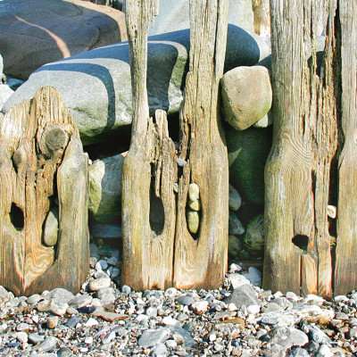 Sea-sculpted Wood - Menai Straits