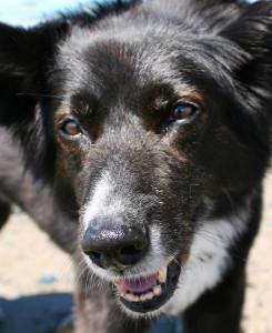 My Beautiful Dog Cati