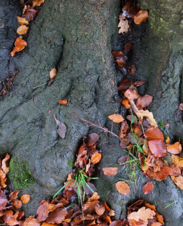 Late Autumn Workshop at Erddig National Trust