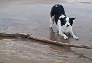 Mab the Dog wishful thinking!
