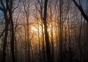 Sun setting through the Trees by the Afon Mawdach